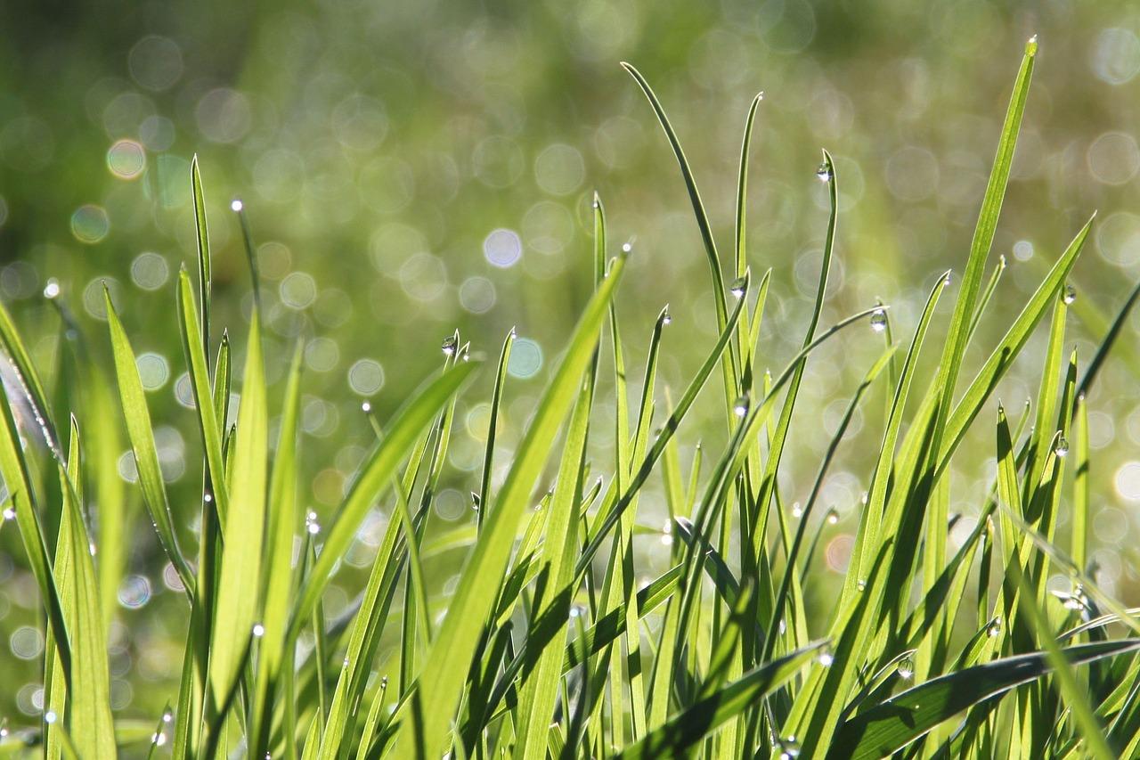 Ce ar fi să trăim o zi fără nicio frică_iarba inalta