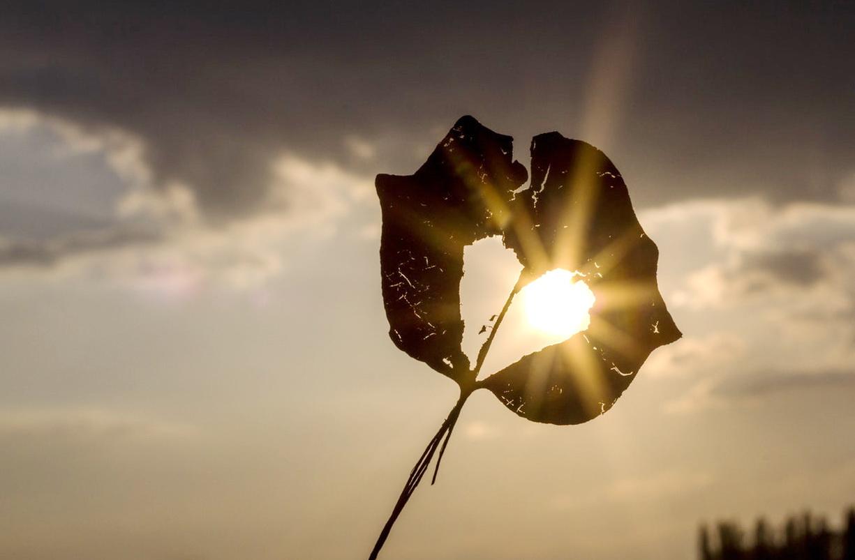 Bucuria lucrurilor simple(4)_inima din frunza
