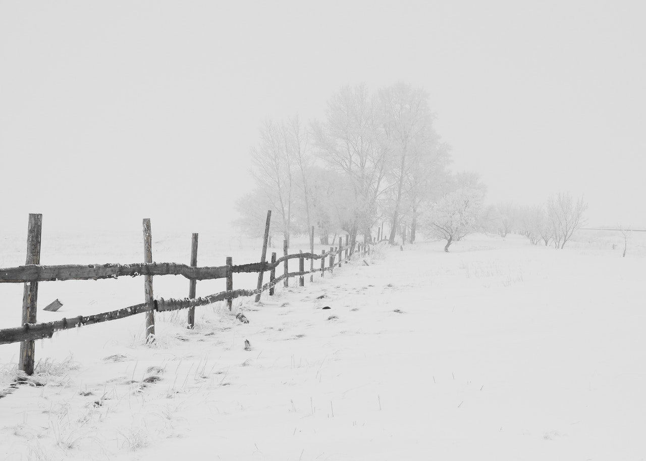 Jurnalul de recunoștință de duminică revine!_iarna pe ulita
