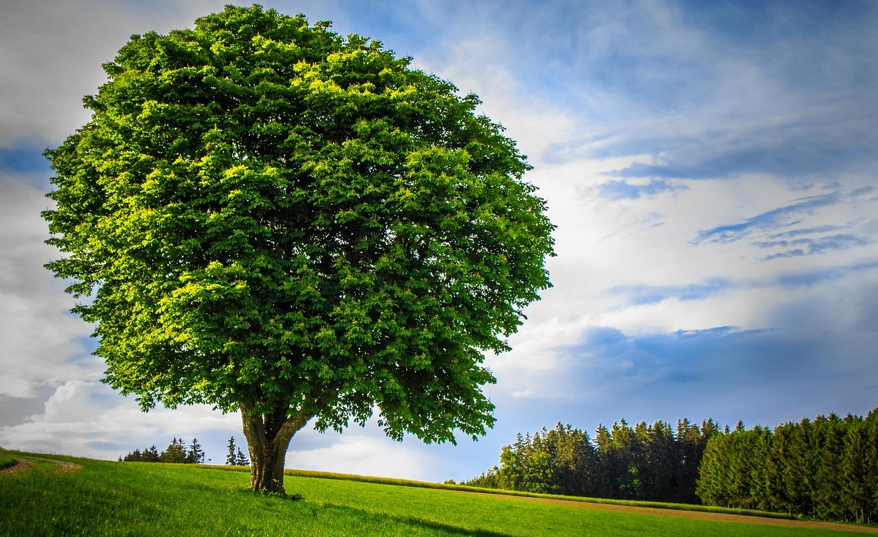 Zilele tale curg fără niciun rost Vezi cum te ajută planificarea să economisești_copac mare