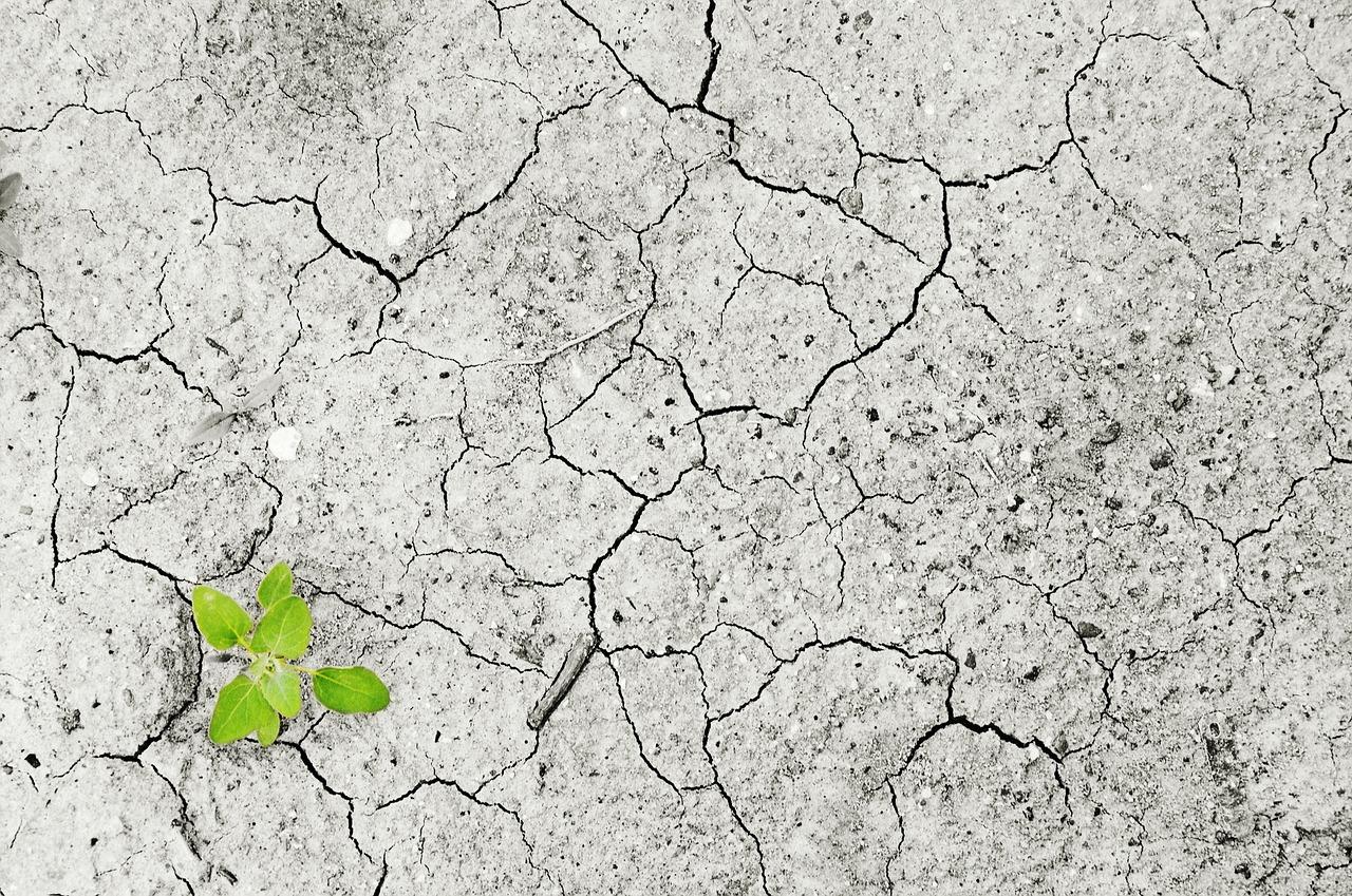 Cum să vezi economisirea cu ochi buni (și să renunți la prejudecăți)_pământ uscat și o singură plantă