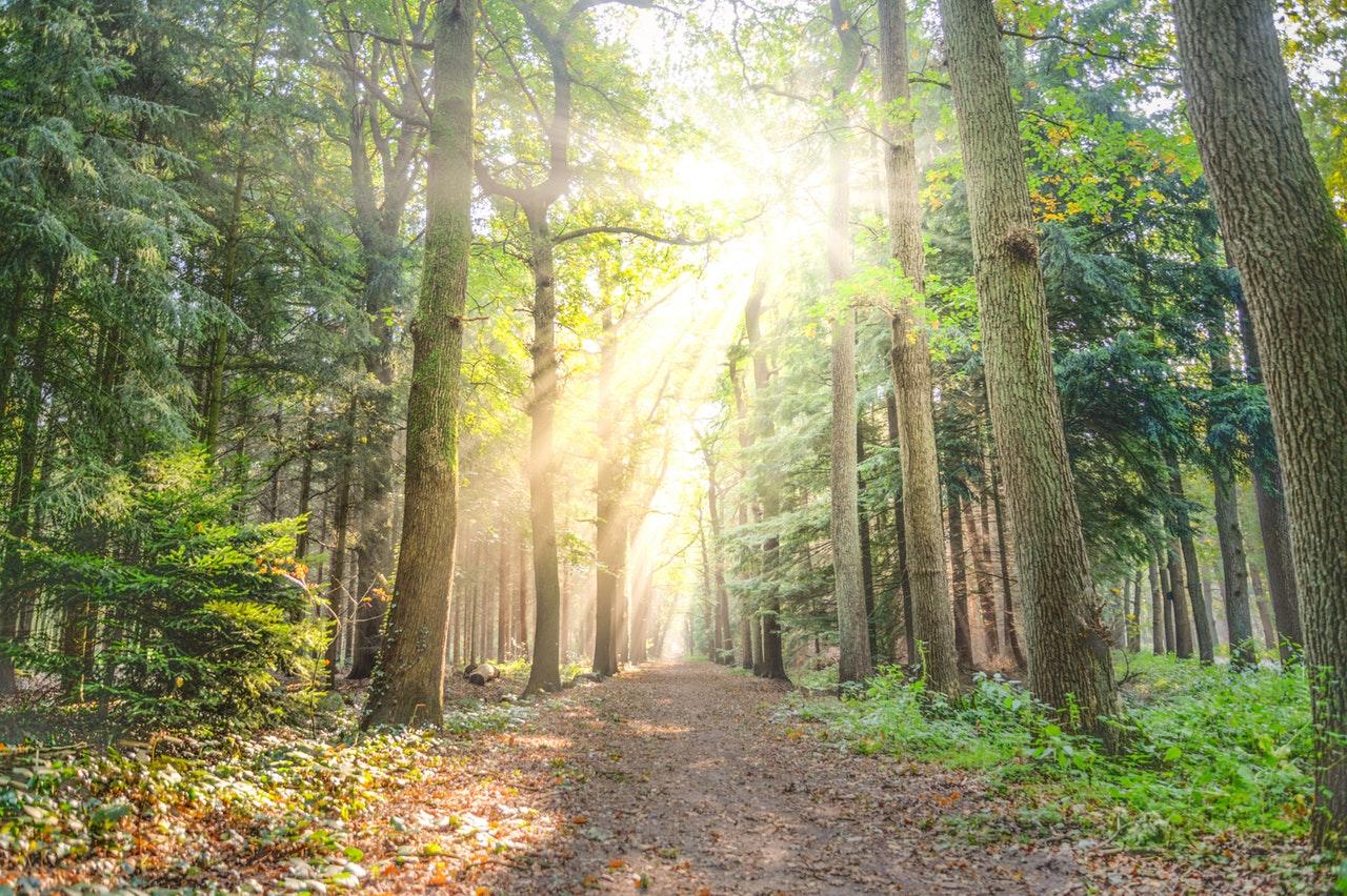 Jurnalul bucuriilor simple#14_pădure însorită