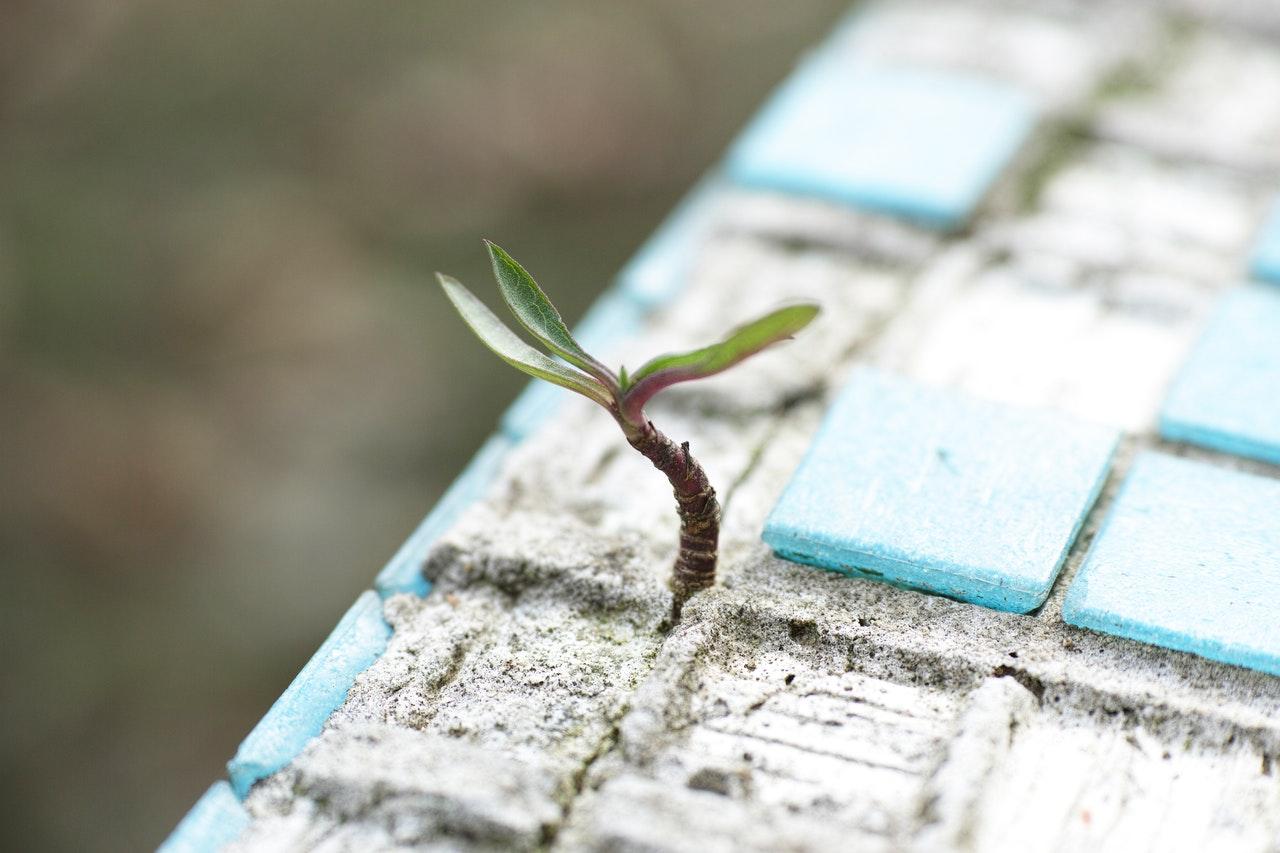 5-lecții-de-viață-inspirate-din-comunitate_planta-care-creste