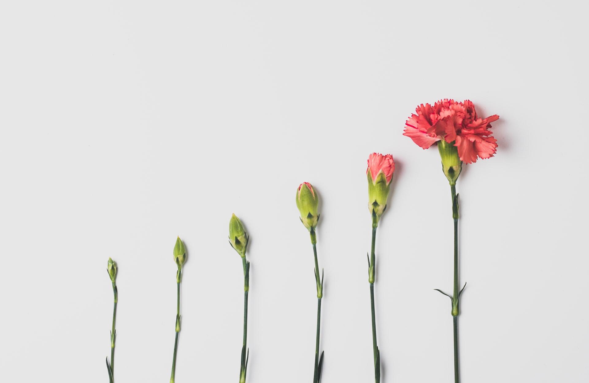 Confesiuni-financiare-cu-oameni-ca-tine_floare-care-infloreste